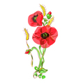 bouquet with poppies and ears vector image