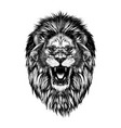 hand drawn sketch lion head in black isolated vector image vector image