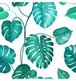 Topical palm leaves vector image vector image