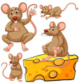 Brown mouse and cheese slice vector image vector image