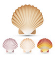 scallop seashell set exotic souvenir vector image