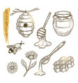 set of honey elements sketch of sweet vector image