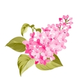 Spring syringa flower vector image vector image