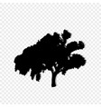 black silhouette of leafed tree isolated on vector image vector image