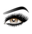 brown woman eye with long false lashes with vector image