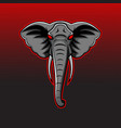 elephant head mascot logo vector image