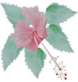 beautiful hibiscus flower and green leaves vector image vector image