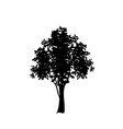black silhouette of deciduous tree icon isolated vector image vector image