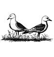 Bird Black-legged Kittiwake vector image vector image