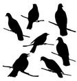birds at tree branch vector image vector image
