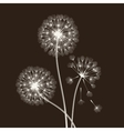 Blowball seeds vector image