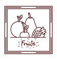 orange pear strawberry cherry fruits doodle design vector image