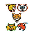 wild and domestic cats collection series vector image