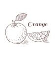Orange with leaf in engraving style vector image vector image