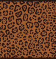 seamless leopard fur vector image