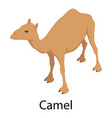 camel icon isometric style vector image