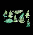 close up 8 leaf fern isolated on black background vector image