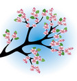 peach blossoms vector image vector image