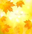 autumn background with yellow leavers vector image
