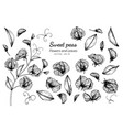 collection set of sweet pea flower and leaves vector image