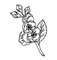 doodle jasmine flowers with leaves black outline vector image vector image
