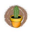 houseplants green cactus in a bright flower pot vector image vector image