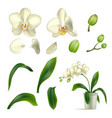 orchid petal stalk pot realistic isolated vector image vector image