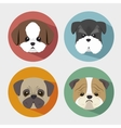 purebred dogs design vector image
