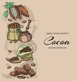 chocolate cacao and cocoa beans banner vector image vector image