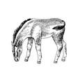 hand drawn sketch foal grazing vector image vector image