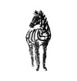 ink zebra sketch isolated on white background vector image