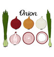 collection hand drawn fresh onions isolated vector image vector image