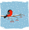 Cute bullfinch vector image