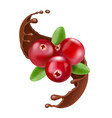 red cranberry splash of chocolate forest berry vector image vector image