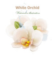 white orchid flowers watercolor isolated vector image vector image
