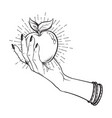 apple in female hand isolated hand drawn line art vector image vector image