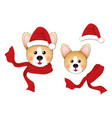 corgi santa claus santa hat red scarf isolated on vector image vector image