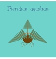 flat on background Pteridium vector image