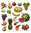 fruits natural fresh organic sketch icons vector image