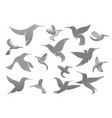icons of colibri humming bird vector image