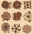 flower coffee vector image vector image