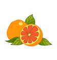 grapefruit drawing summer fruit color vector image vector image