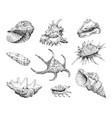 seashells hand drawn set vector image vector image