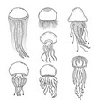 set jellyfishes vector image