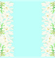 snow white agapanthus border - lily of the nile vector image vector image