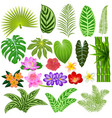 a set of tropical leaves and flowers on a white vector image