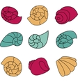 Set of colorful shell on white background vector image