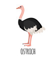 cute ostrich in flat style vector image vector image