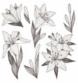 flowers hand drawing set of for printing vector image vector image