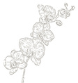 Hand Drawn Orchid Sketch vector image vector image